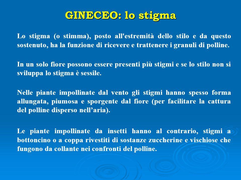 GINECEO: lo stigma