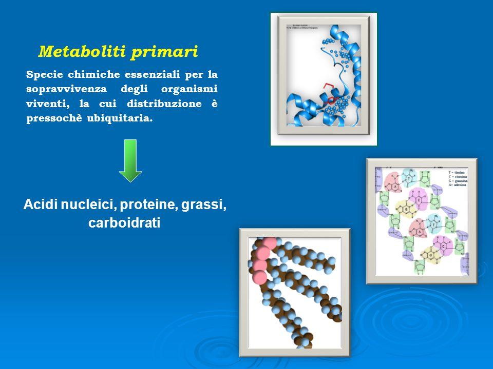 Acidi nucleici, proteine, grassi,