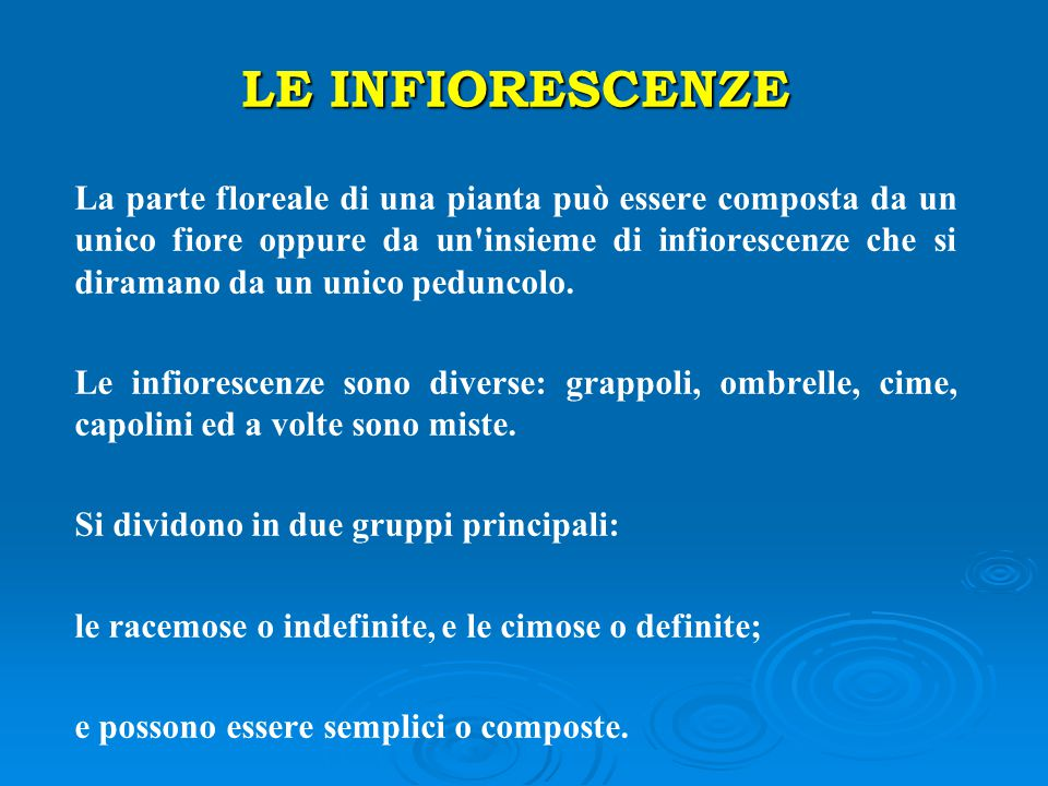 LE INFIORESCENZE
