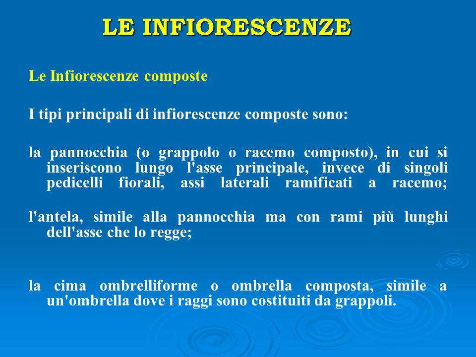 LE INFIORESCENZE Le Infiorescenze composte