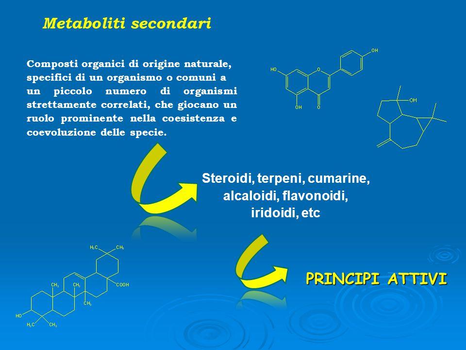 Steroidi, terpeni, cumarine, alcaloidi, flavonoidi, iridoidi, etc