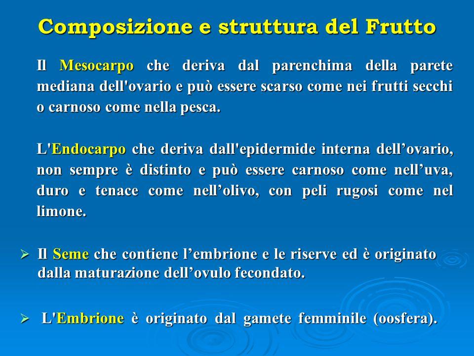 Composizione e struttura del Frutto