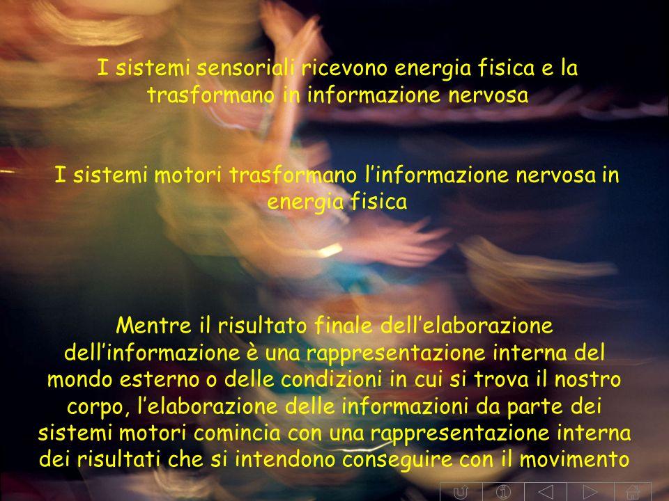 I sistemi motori trasformano l'informazione nervosa in energia fisica