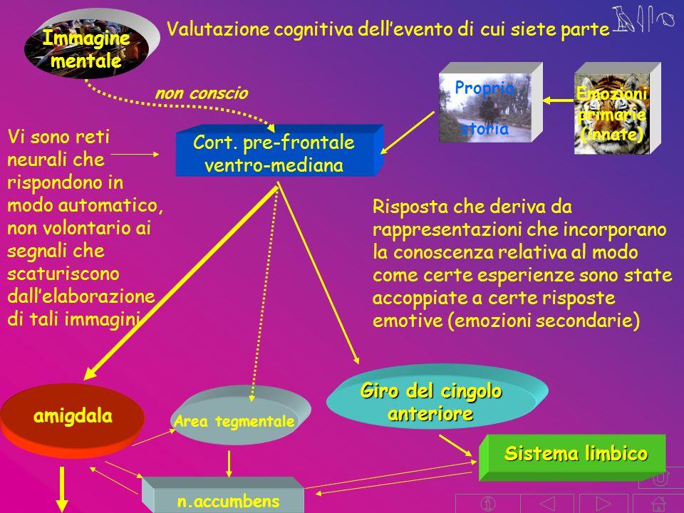 Immagine mentale Giro del cingolo anteriore amigdala Sistema limbico