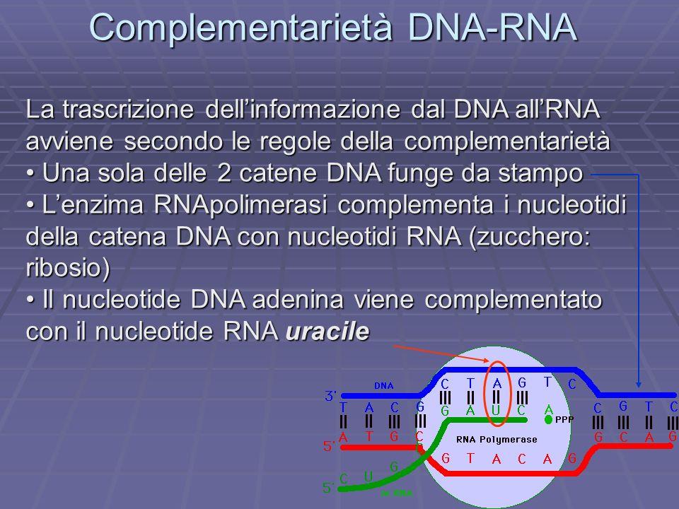 Complementarietà DNA-RNA