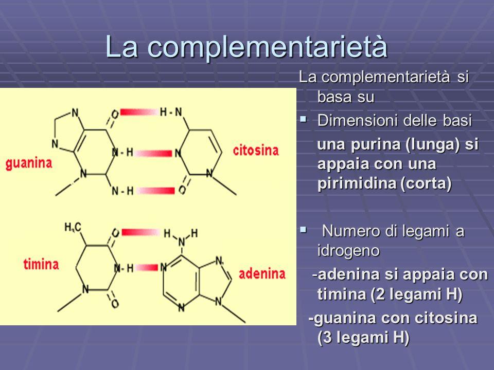 La complementarietà La complementarietà si basa su