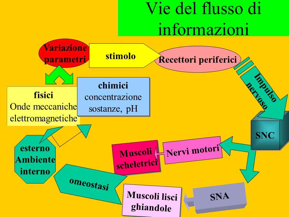 Vie del flusso di informazioni