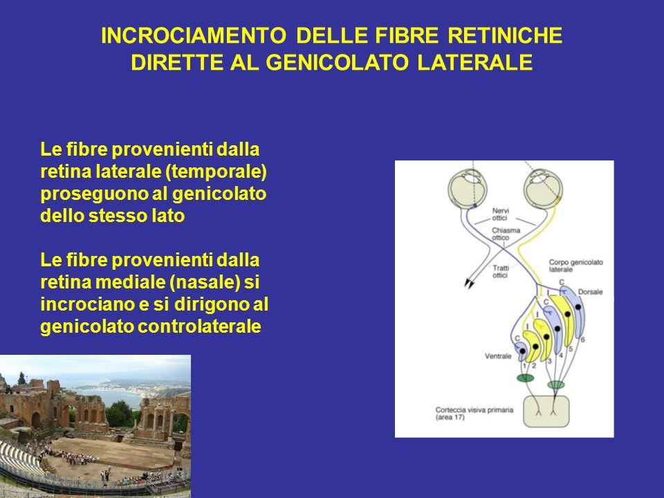 INCROCIAMENTO DELLE FIBRE RETINICHE DIRETTE AL GENICOLATO LATERALE