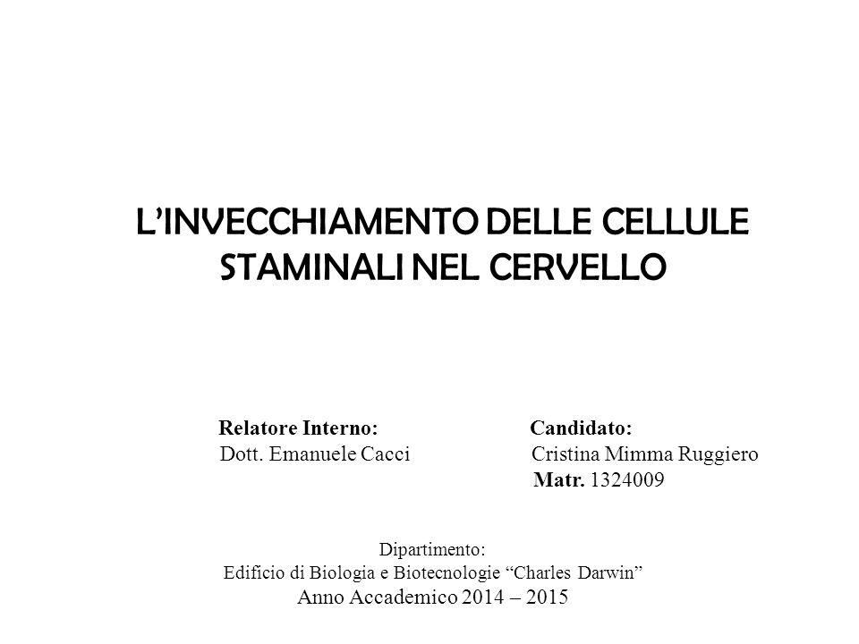 L'INVECCHIAMENTO DELLE CELLULE STAMINALI NEL CERVELLO