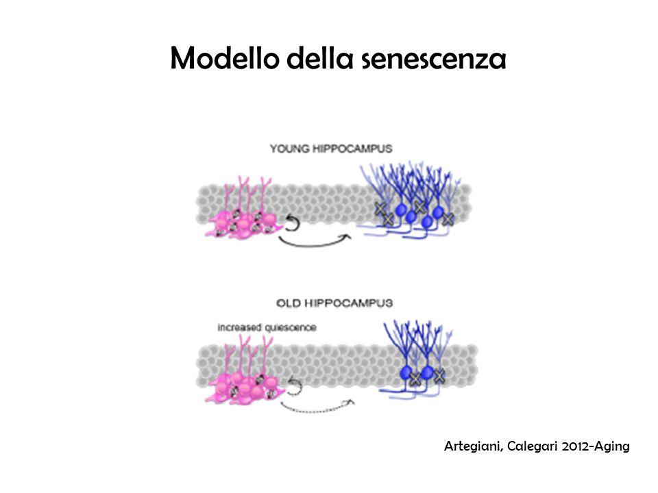 Modello della senescenza