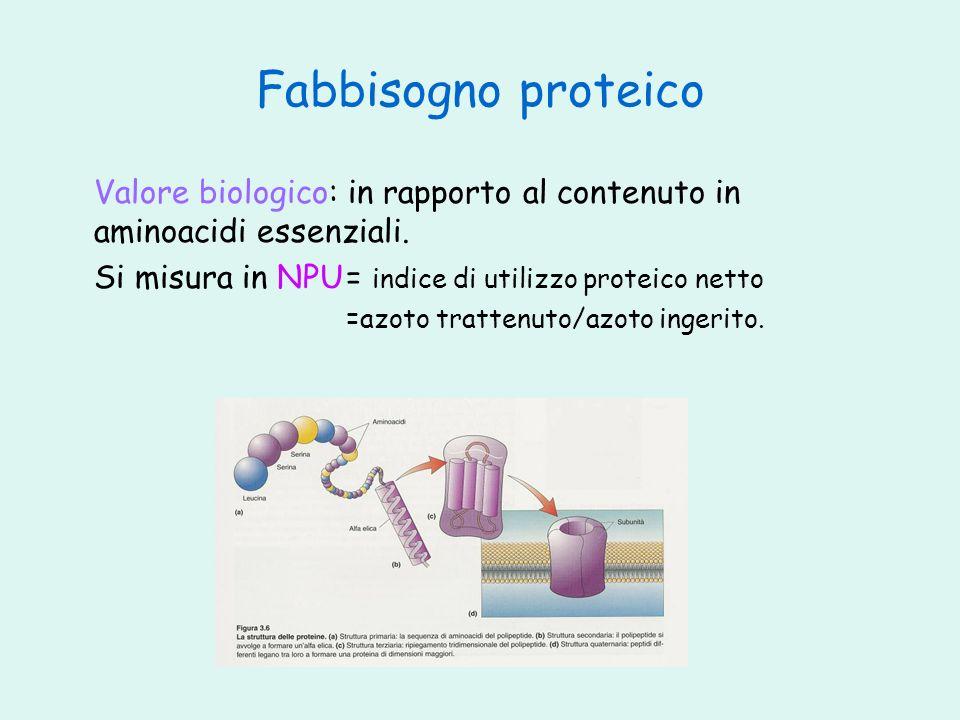Fabbisogno proteico Valore biologico: in rapporto al contenuto in aminoacidi essenziali. Si misura in NPU = indice di utilizzo proteico netto.