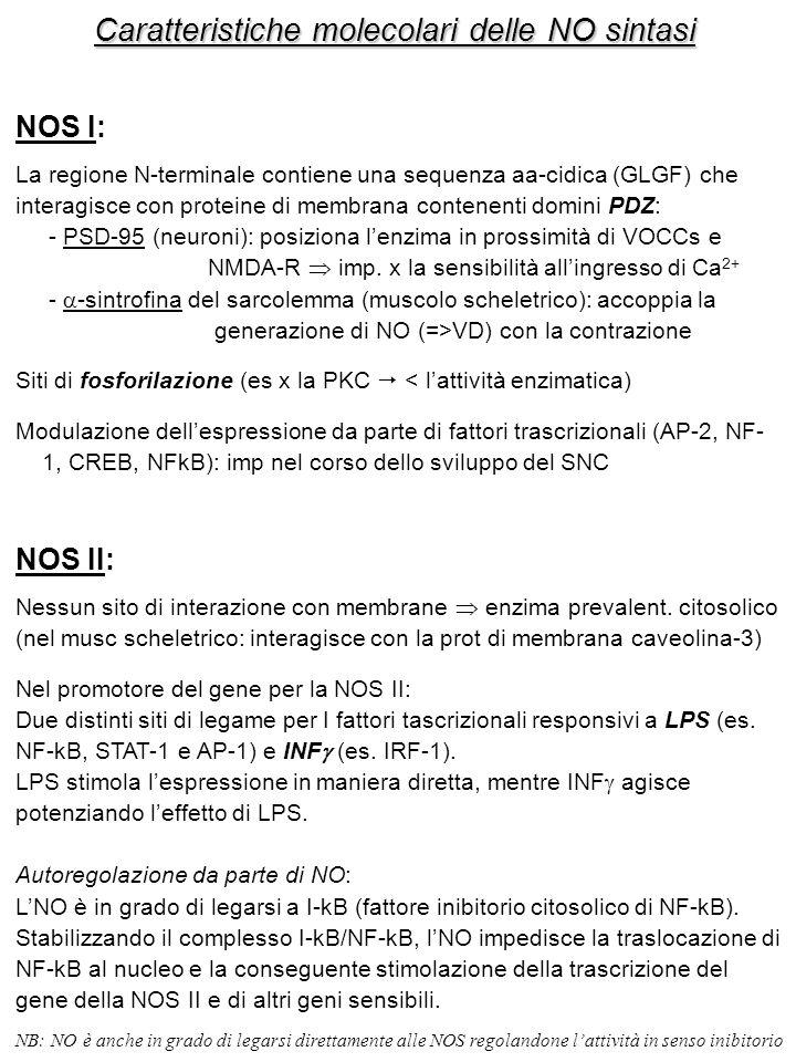 Caratteristiche molecolari delle NO sintasi