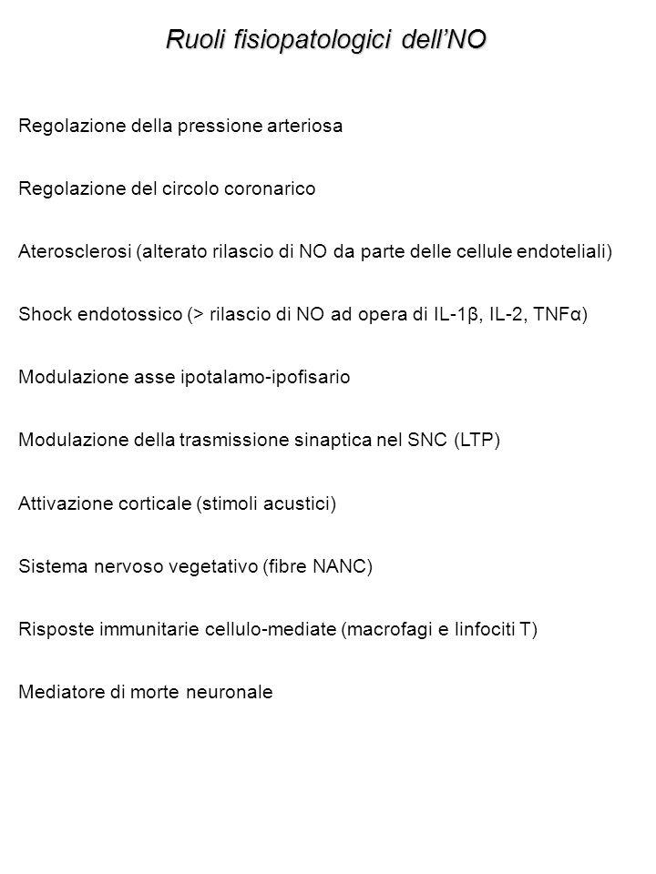 Ruoli fisiopatologici dell'NO