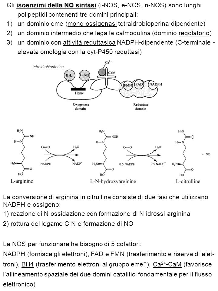 un dominio eme (mono-ossigenasi tetraidrobioperina-dipendente)