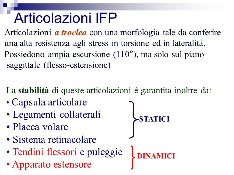 Articolazioni IFP Legamenti collaterali Placca volare
