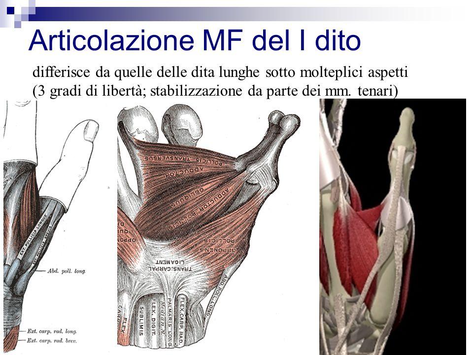Articolazione MF del I dito