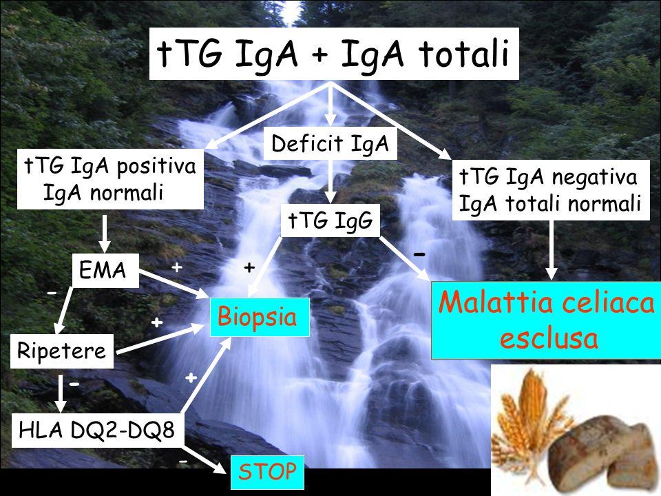 tTG IgA + IgA totali - - Malattia celiaca esclusa + + Biopsia + + - -