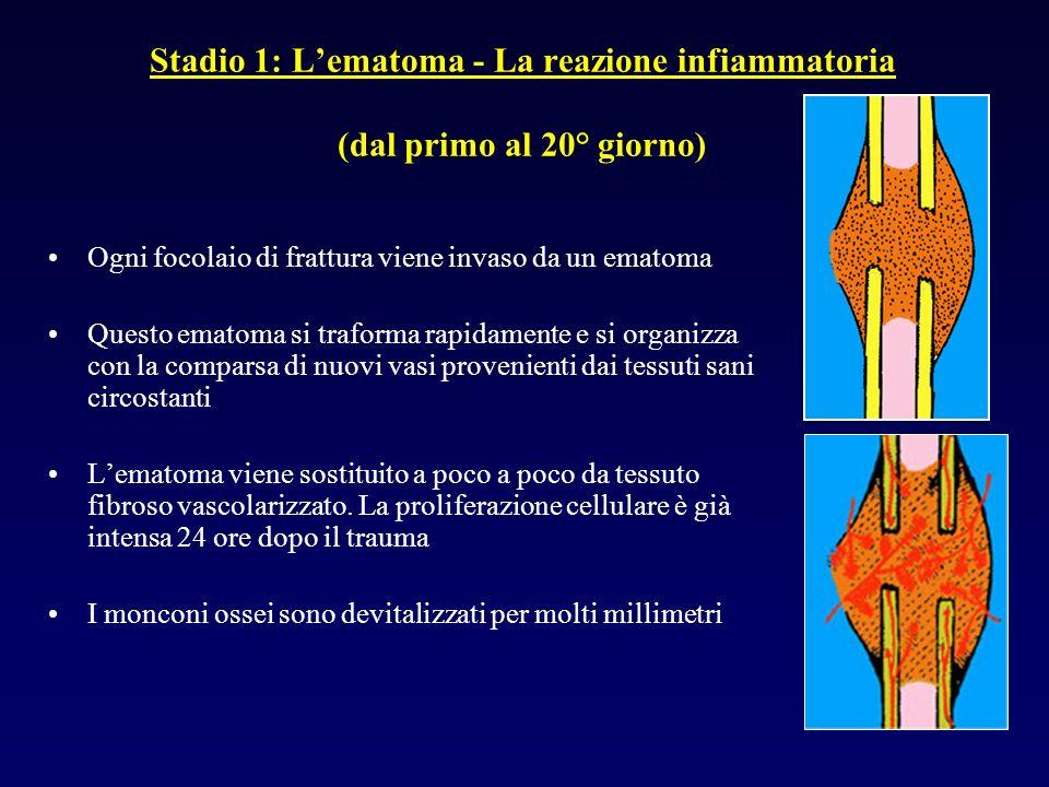 Stadio 1: L'ematoma - La reazione infiammatoria (dal primo al 20° giorno)