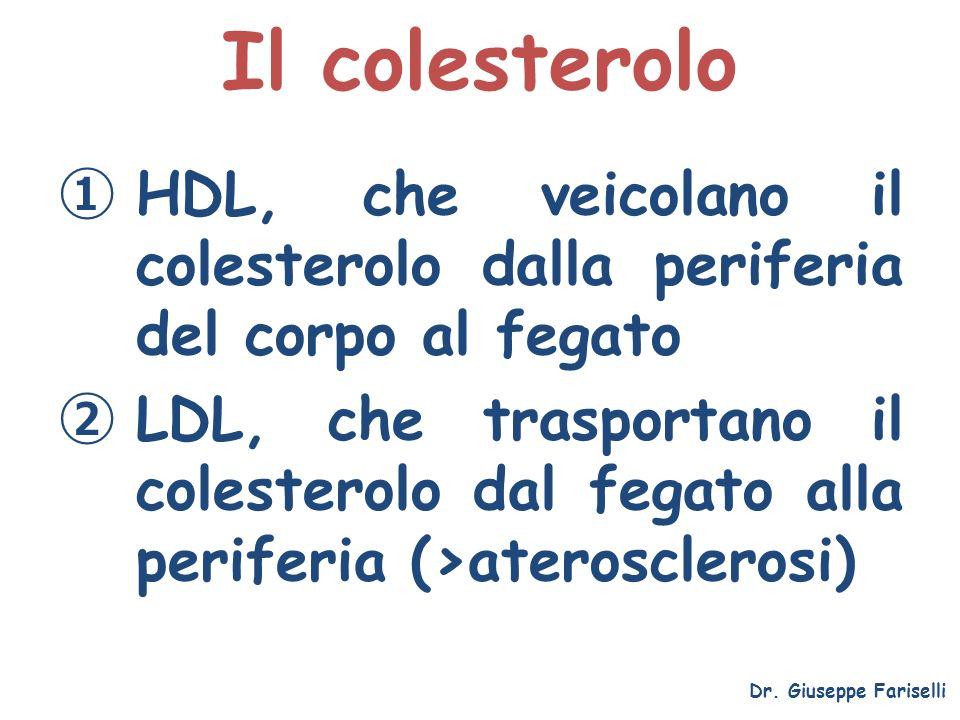 Il colesterolo HDL, che veicolano il colesterolo dalla periferia del corpo al fegato.