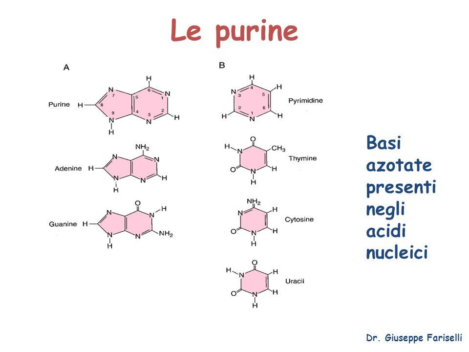Le purine Basi azotate presenti negli acidi nucleici