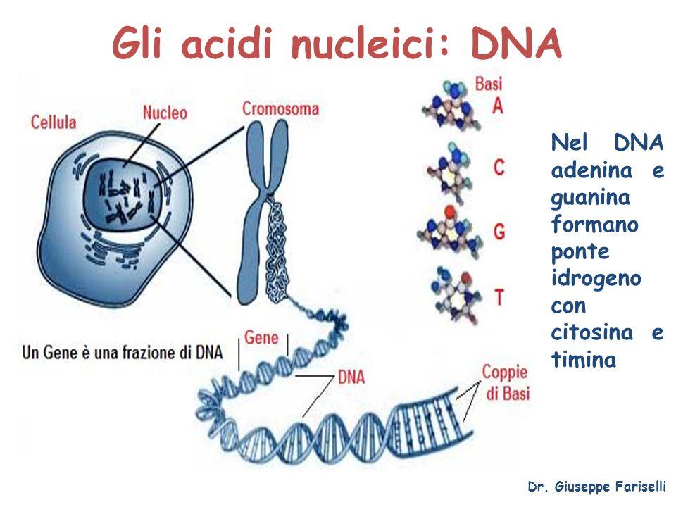 Gli acidi nucleici: DNA