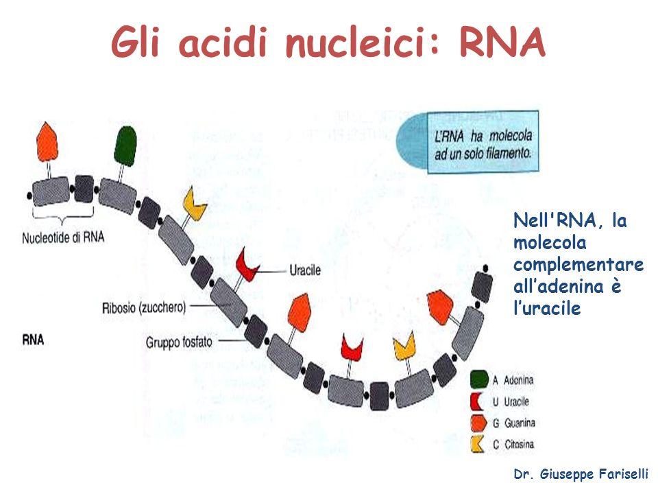 Gli acidi nucleici: RNA