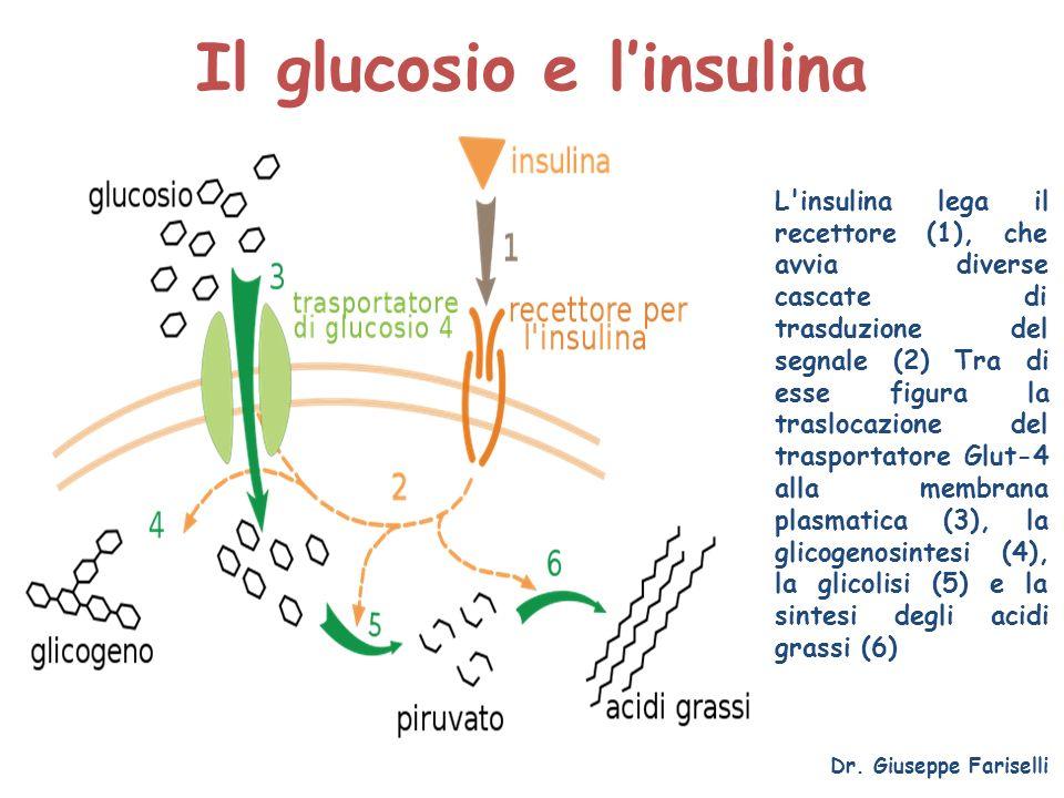 Il glucosio e l'insulina