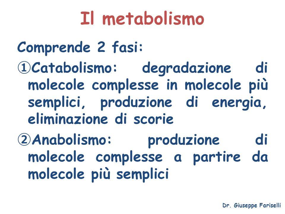 Il metabolismo Comprende 2 fasi: