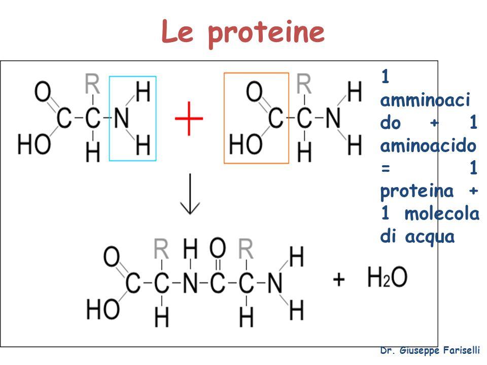 Le proteine 1 amminoacido + 1 aminoacido = 1 proteina + 1 molecola di acqua.