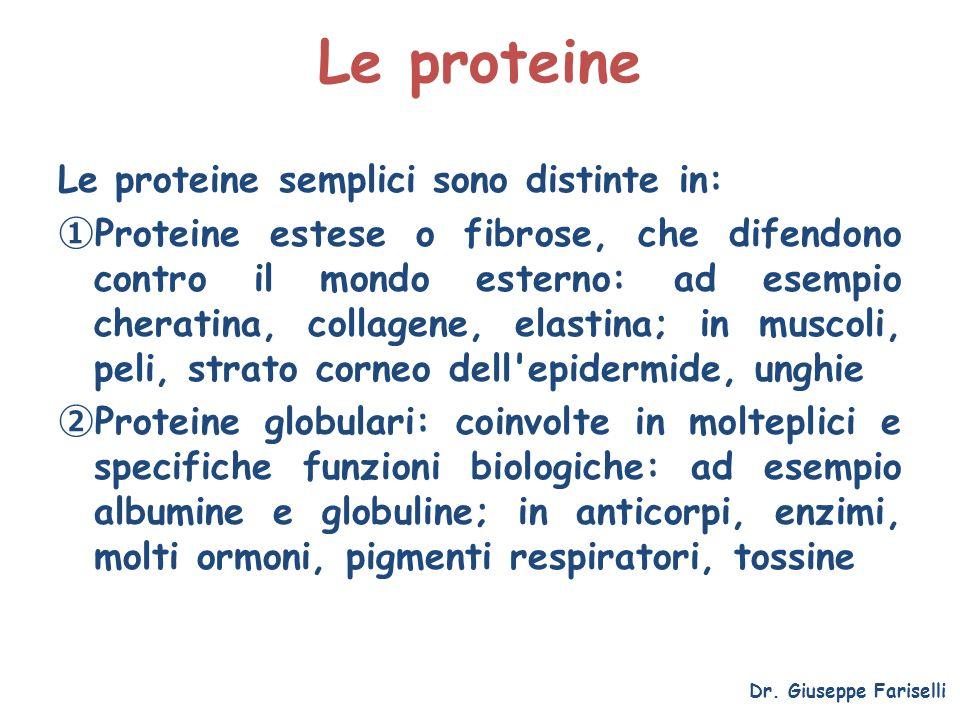 Le proteine Le proteine semplici sono distinte in: