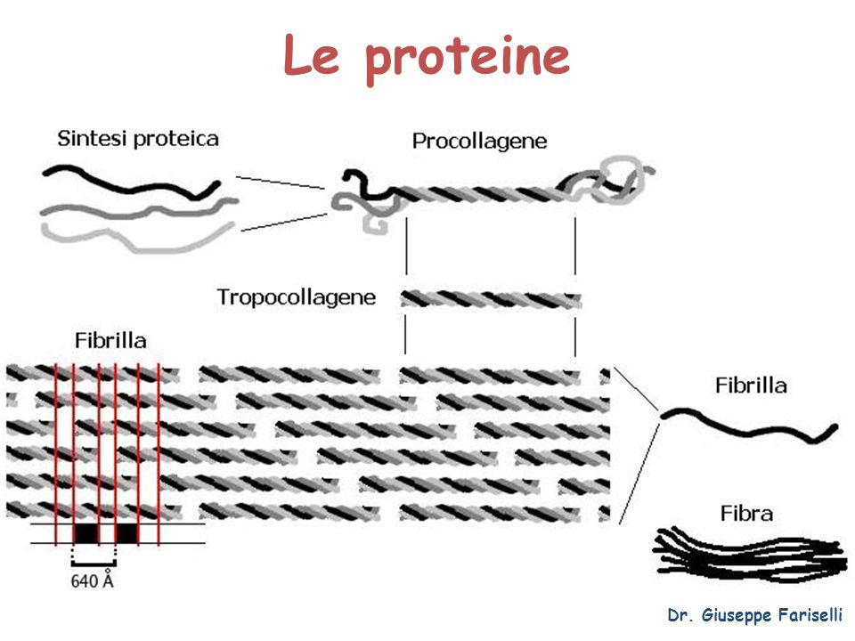 Le proteine Dr. Giuseppe Fariselli