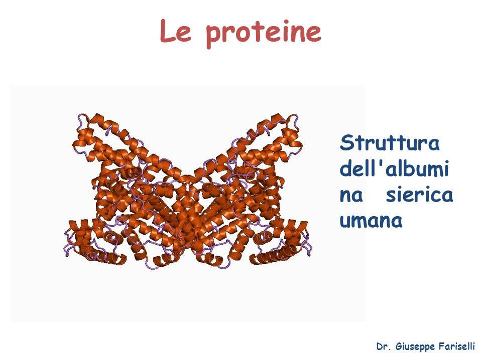 Le proteine Struttura dell albumina sierica umana