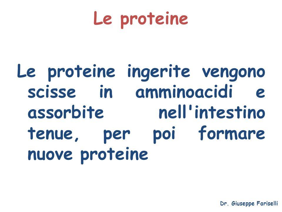 Le proteine Le proteine ingerite vengono scisse in amminoacidi e assorbite nell intestino tenue, per poi formare nuove proteine.
