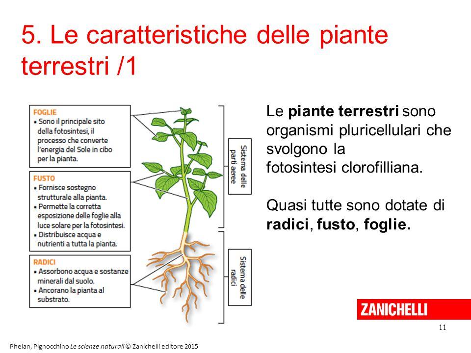 5. Le caratteristiche delle piante terrestri /1