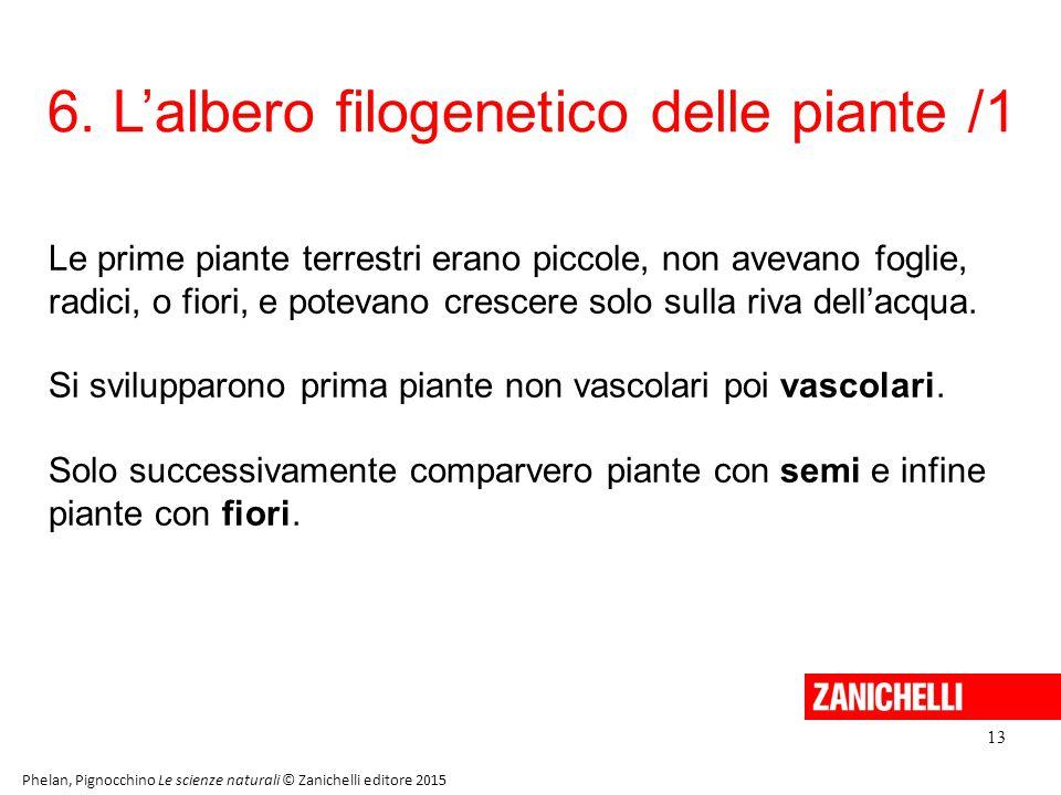 6. L'albero filogenetico delle piante /1