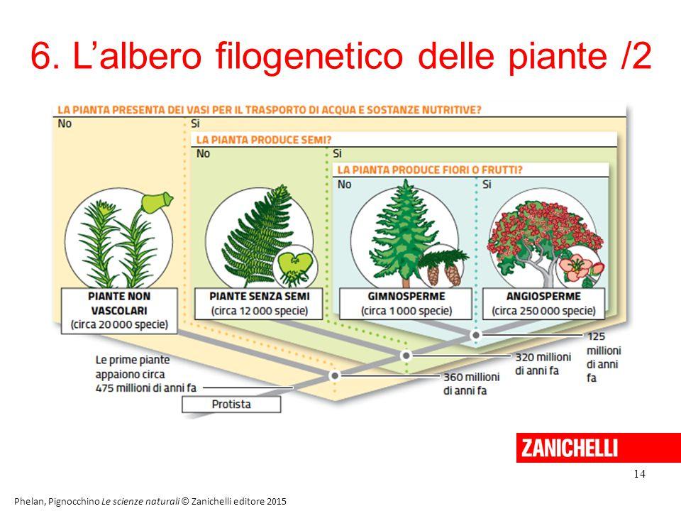 6. L'albero filogenetico delle piante /2