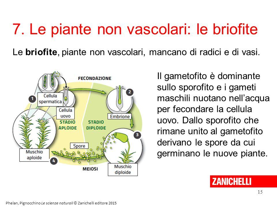 7. Le piante non vascolari: le briofite