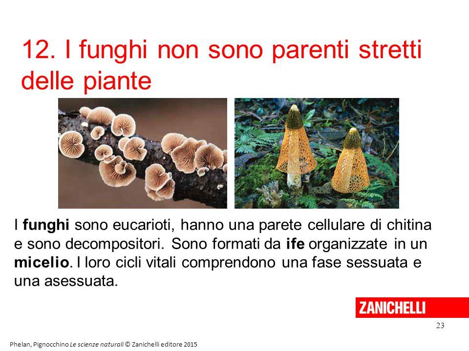12. I funghi non sono parenti stretti delle piante