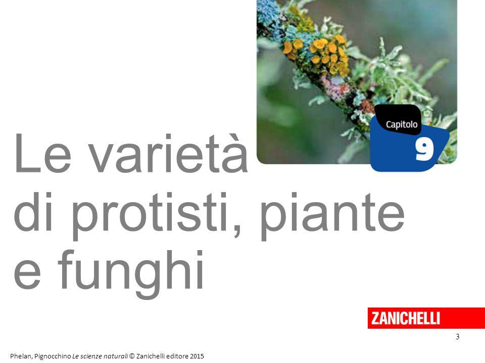 Le varietà di protisti, piante e funghi 3 13/11/11 3