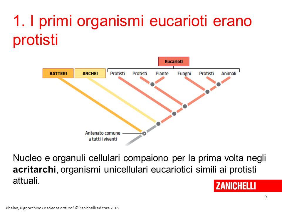 1. I primi organismi eucarioti erano protisti