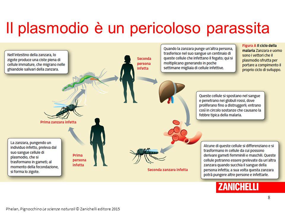 Il plasmodio è un pericoloso parassita
