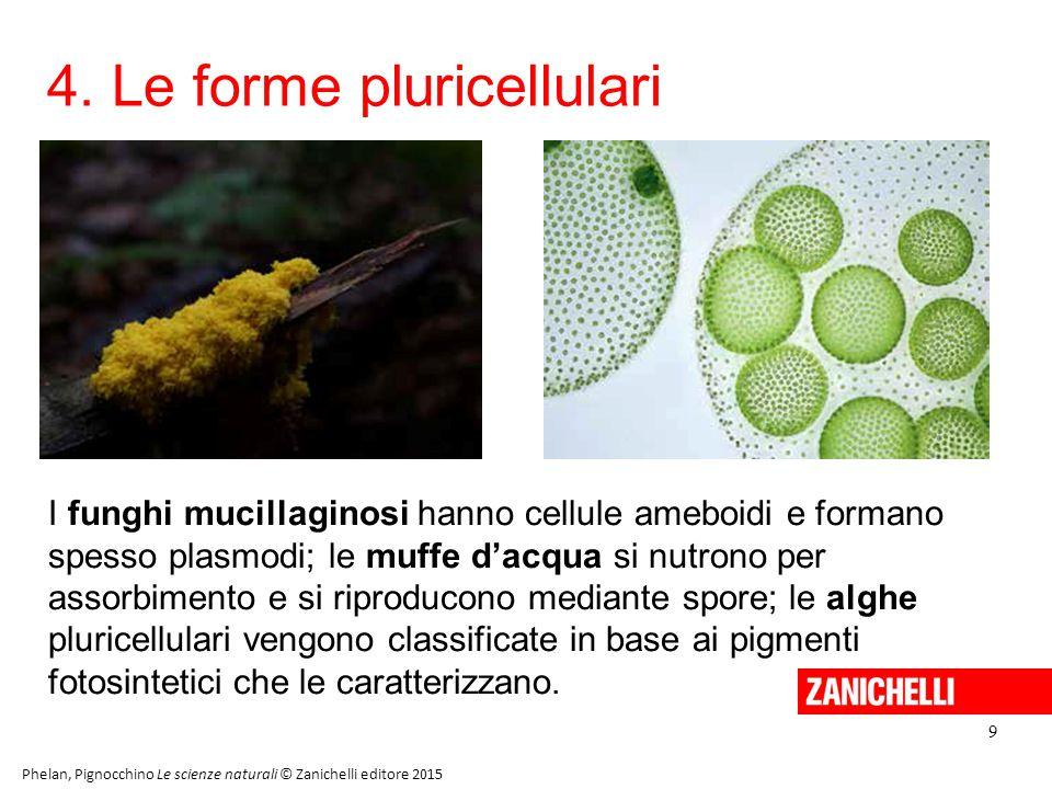 4. Le forme pluricellulari