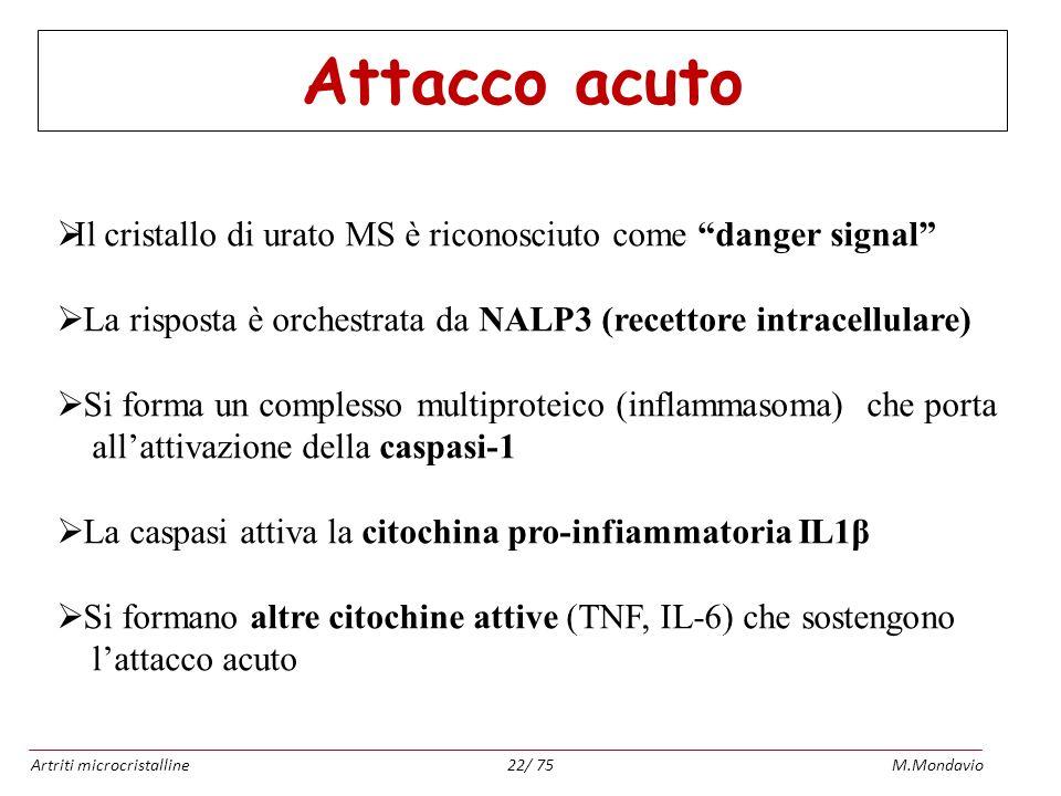 Attacco acuto Il cristallo di urato MS è riconosciuto come danger signal La risposta è orchestrata da NALP3 (recettore intracellulare)