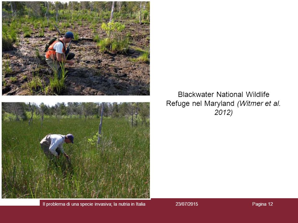 Blackwater National Wildlife Refuge nel Maryland (Witmer et al. 2012)