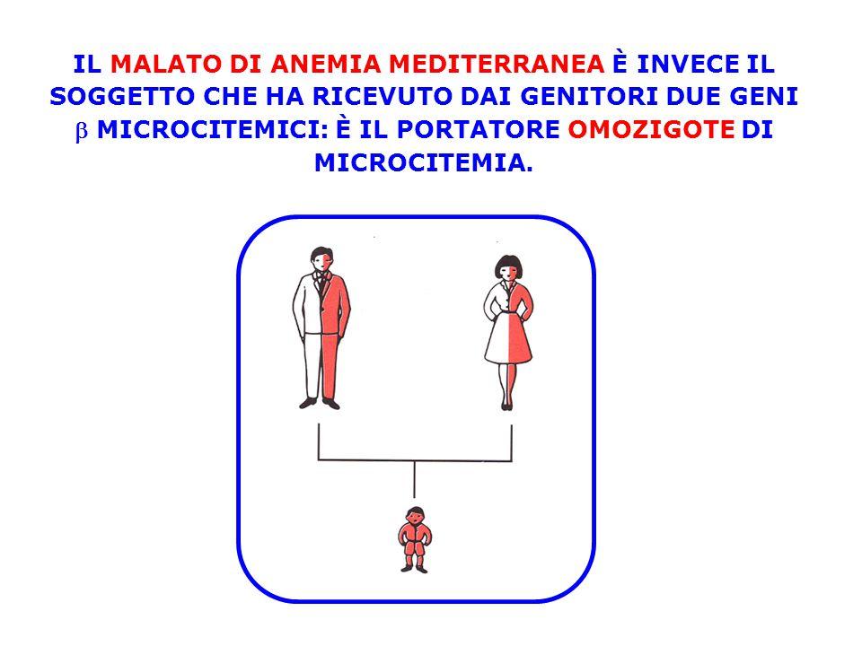 IL MALATO DI ANEMIA MEDITERRANEA È INVECE IL SOGGETTO CHE HA RICEVUTO DAI GENITORI DUE GENI b MICROCITEMICI: È IL PORTATORE OMOZIGOTE DI MICROCITEMIA.