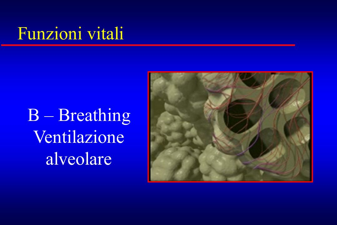 Ventilazione alveolare