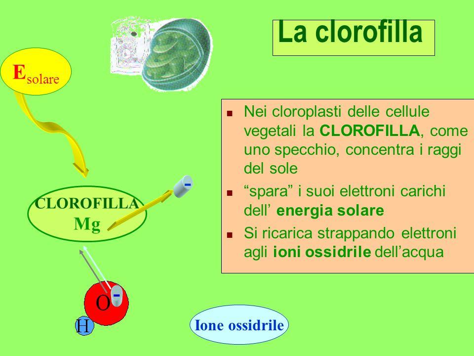 La clorofilla Esolare - Mg