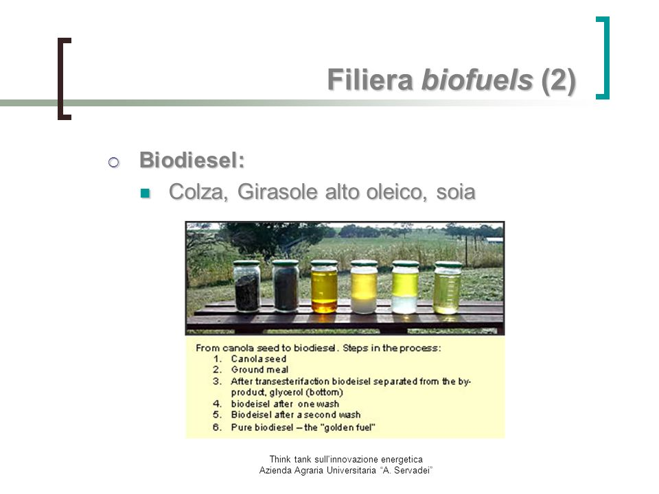 Filiera biofuels (2) Biodiesel: Colza, Girasole alto oleico, soia