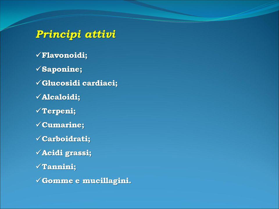 Principi attivi Flavonoidi; Saponine; Glucosidi cardiaci; Alcaloidi;