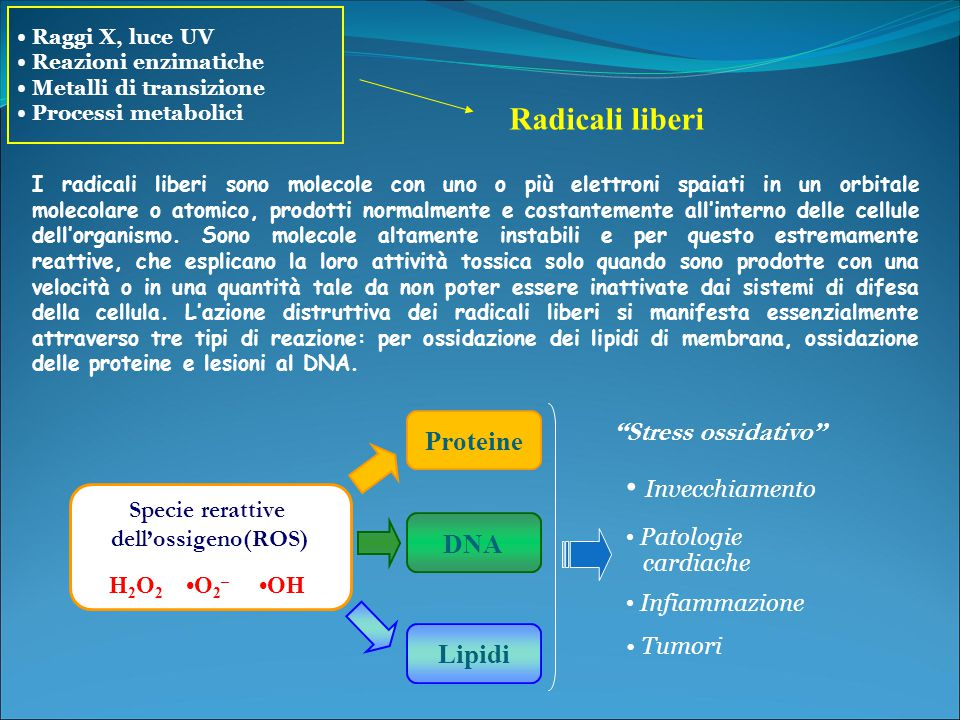 Radicali liberi • Invecchiamento Stress ossidativo Proteine DNA